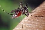 ALERTA-El-virus-zika-puede-llegar-a-Venezuela.-NoticiasSOS-848×396
