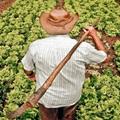 agriculturafamiliar-700×350