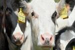 banner-colageno-bovino