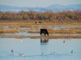 by-Lia-Papadranga-web-Ramsar-Delta-del-río-Axios.-Grecia