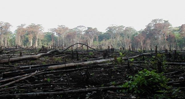 deforestación-700×525