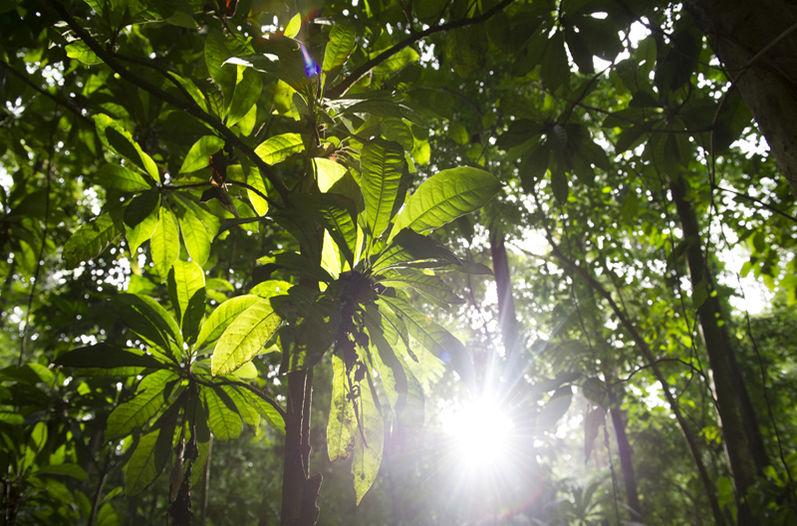 costarricense-hectareas-esfuerzos-JEANNINA-CORDERO_LNCIMA20151112_0011_5