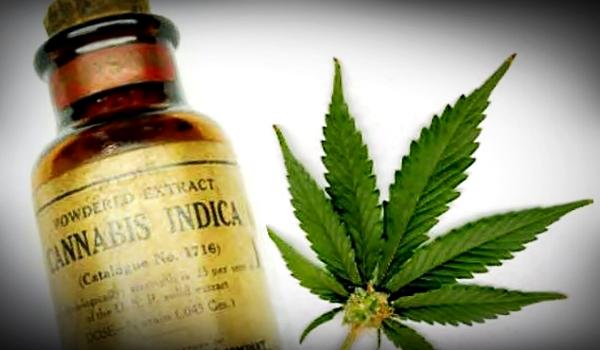 cannabis-indica-oil