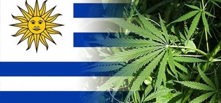 ahora-puedes-fumar-marihuana-legal-en-clubes-de-uruguay-5169_XL