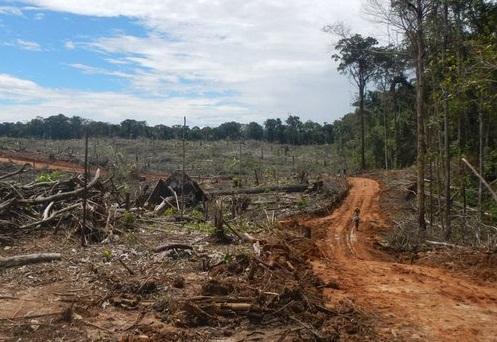 DeforestacionPeru