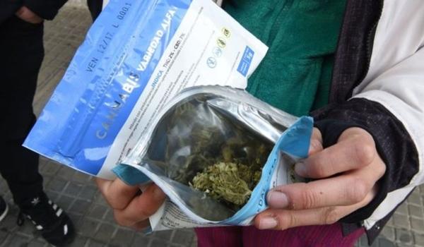 cannabis-uruguay