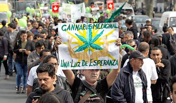 noticia-cannabis