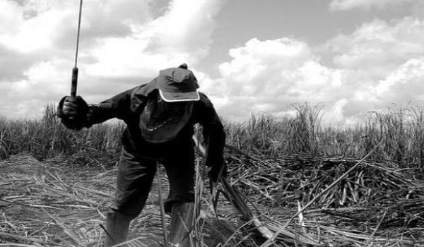 Brasil Trabajo Esclavo