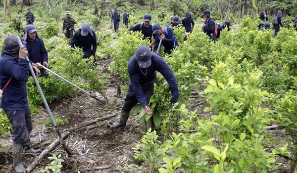 colombia-cultivos