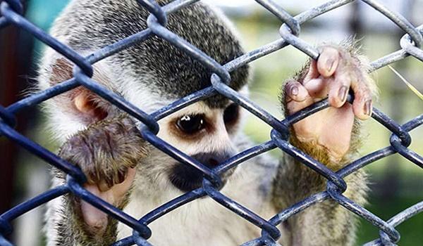 tráfico de animales silvestres-ecuador