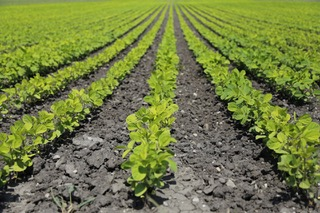 agricultura nota 4