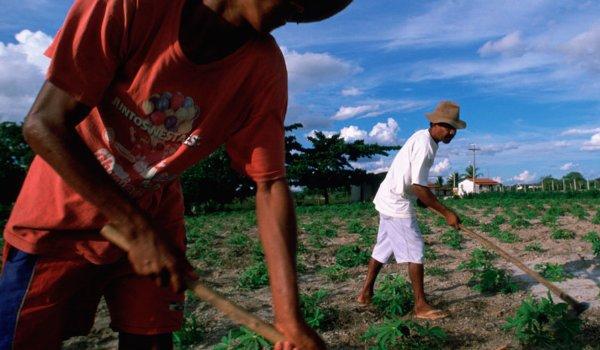 campesinos brasil