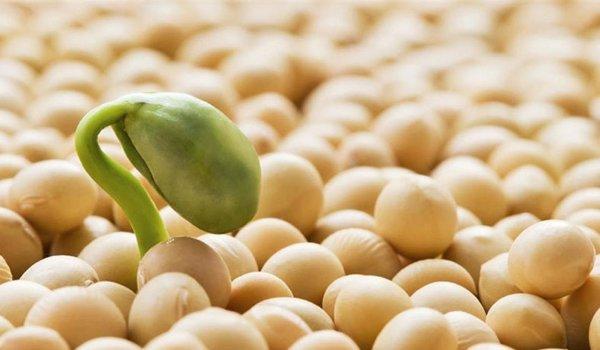 ley de semillas agrotóxicos