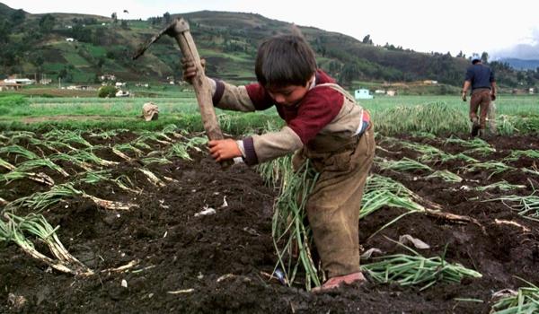 nodal trabajo infantil