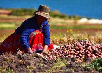 Perú agricultura