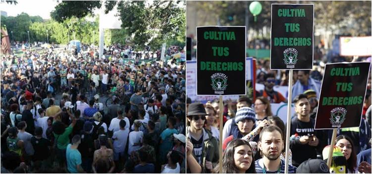 marihuana brasil chile